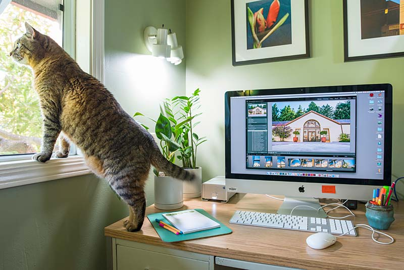 Home office with cat